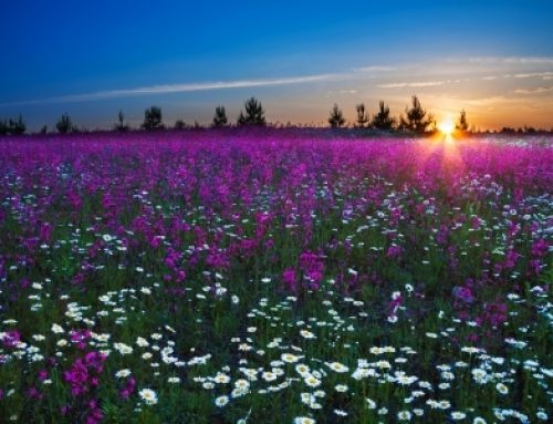 Faith, love and family, grown like flowers of the field